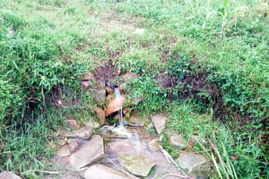 The Water Project: Bukhaywa Community, Asumani Spring -  Current Water Source