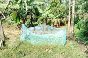 The Water Project: Mukhuyu Community, Kwawanzala Spring -  Mosquito Nets Used As Fencing