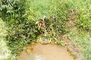 The Water Project: Musango Community, Emufutu Spring -  Water Source