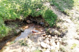 The Water Project: Sambuli Community, Nechesa Spring -  Current Water Source