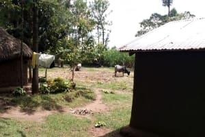 The Water Project: Burachu B Community, Namukhuvichi Spring -  Household
