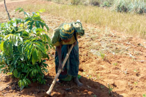 The Water Project: Eshiakhulo Community, Asman Sumba Spring -  Farming