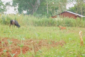 The Water Project: Busichula Community, Marko Spring -  Community Farm