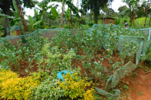 The Water Project: Mukhunya Community, Mwore Spring -  Family Garden