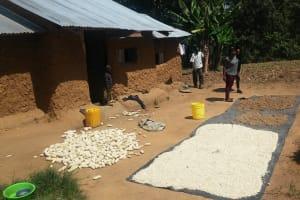 The Water Project: Emukangu Community, Okhaso Spring -  Grains Drying