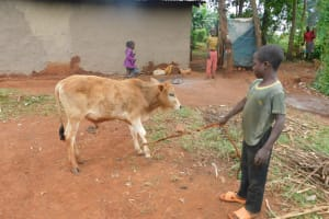 The Water Project: Busichula Community, Marko Spring -  Caring For Livestock