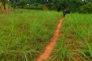 The Water Project: Mukhunya Community, Mwore Spring -  Path To The Spring