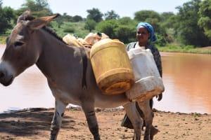 The Water Project: Kathuli Community -  Donkey