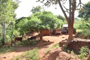 The Water Project: Utuneni Community B -  Homestead