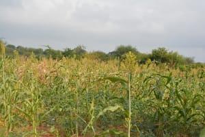 The Water Project: Katovya Community -  Farm