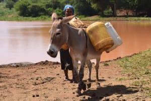 The Water Project: Kathuli Community A -  Donkey