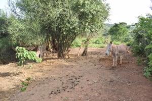 The Water Project: Utuneni Community C -  Donkeys