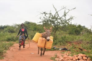 The Water Project: Katovya Community A -  Donkey Carries Water