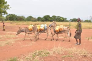 The Water Project: Kamulalani Primary School -  Donkeys Carrying Water
