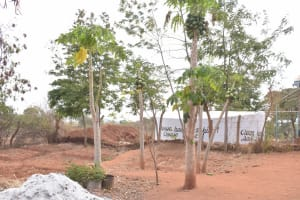The Water Project: Katalwa Secondary School -  Mango Trees
