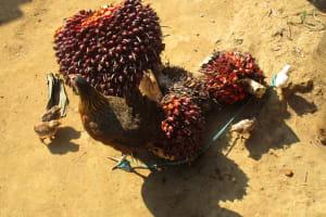The Water Project: Lungi, Tonkoya Village -  Palm Karnel