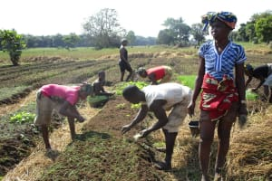 The Water Project: Lungi, Tonkoya Village -  Working In The Community Garden