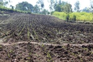 The Water Project: Bukhakunga Community, Mukomari Spring -  Community Farm