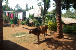 The Water Project: Lutonyi Community, Lutomia Spring -  Household