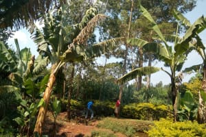 The Water Project: Lutonyi Community, Lutomia Spring -  Banana Farm