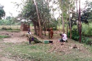 The Water Project: Buhayi Community, Nasichundukha Spring -  Working At Household
