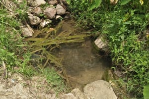 The Water Project: Tumaini Community, Ndombi Spring -  Current Water Source