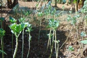 The Water Project: Shamiloli Community, Kwasasala Spring -  Farm