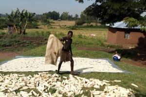 The Water Project: Buhayi Community, Nasichundukha Spring -  Maize Drying