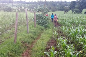 The Water Project: Kambiri Community, Sachita Spring -  Road To The Spring