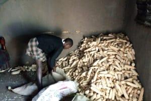 The Water Project: Buhayi Community, Nasichundukha Spring -  Maize Used As Firewood