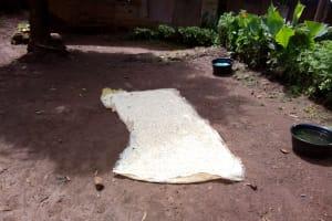 The Water Project: Mushina Community, Shikuku Spring -  Maize Layed Out To Dry