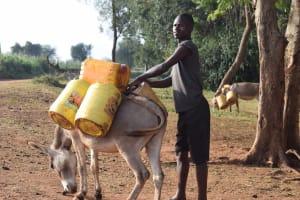 The Water Project: Kangalu Community -  Donkey Carrying Water
