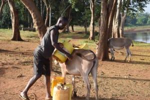The Water Project: Kangalu Community -  Loading Water Onto Donkey
