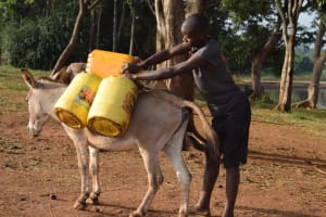 The Water Project: Kangalu Community A -  Donkey Carries Water
