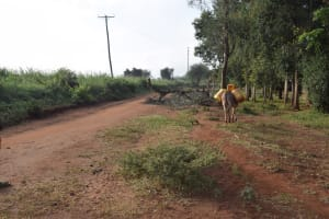 The Water Project: Kangalu Community A -  Donkey With Water Containers