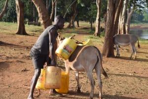 The Water Project: Kangalu Community A -  Loading Water Onto Donkey