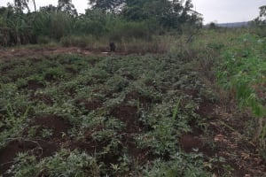 The Water Project: Nyakasenyi Byebega Community -  Farm