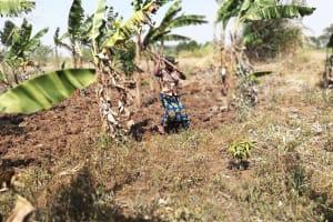 The Water Project: Kimigi Kyamatama Community -  Farming