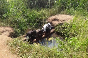 The Water Project: Kimigi Kyamatama Community -  Mr Katusabe Gerald Fetching Water From The Open Well