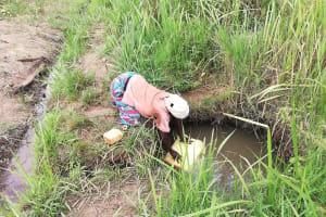 The Water Project: Kikube Nyabubale Community -  Fetching Water At Open Source