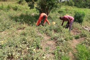 The Water Project: Kikube Nyabubale Community -  Garden