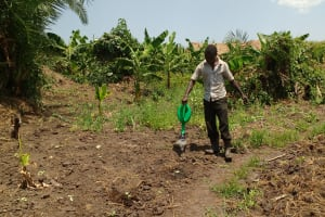 The Water Project:  Watering Cabbage Garden