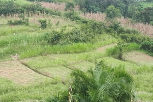 The Water Project: Buyangu Community, Osundwa Spring -  Community Landscape