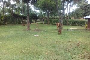 The Water Project: Imusutsu Community, Ikosangwa Spring -  Community