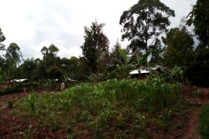 The Water Project: Bumavi Community, Joseph Njajula Spring -  Family Farm