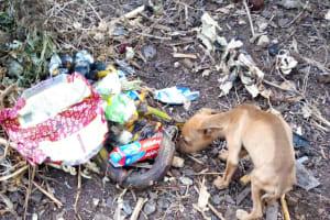 The Water Project: Bumira Community, Imbwaga Spring -  Litter