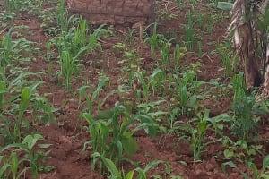The Water Project: Shivembe Community, Murumbi Spring -  Mud Latrine