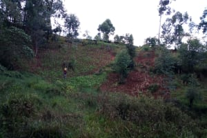 The Water Project: Bumira Community, Imbwaga Spring -  Path Down To The Spring