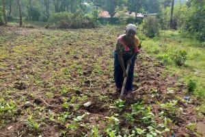 The Water Project: Shikangania Community, Abungana Spring -  Woman Working On Her Farm