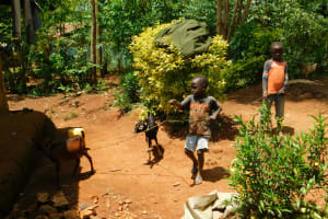 The Water Project: Ebutindi Community, Tondolo Spring -  Taking Care Of A Baby Goat